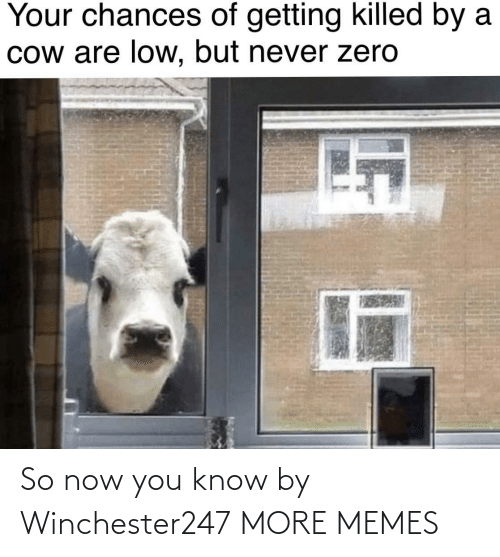 Dank, Memes, and Target: Your chances of getting killed by a  Cow are low, but never zero So now you know by Winchester247 MORE MEMES