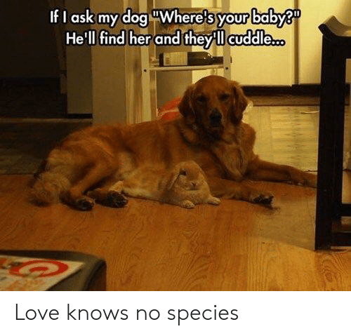 Love, Hell, and Baby: ?  your  CU  If I  ask my dog Where s  Hell find her and they ll cuddle.  baby Love knows no species