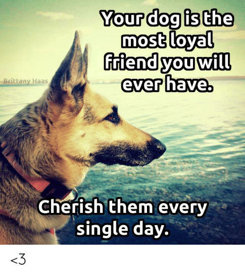 Memes, Single, and 🤖: Your dog is the  most loyal  riend you will  ever have.  Brittany Haas  Cherish them every  single day. <3