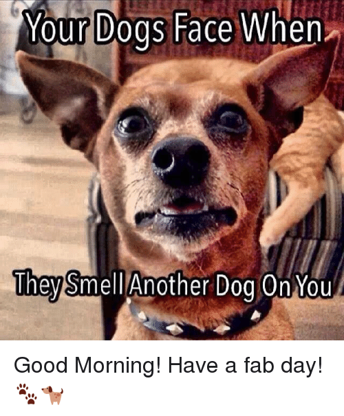 Dog Faces: Your Dogs Face When  They  Another Dog On You  Smell Good Morning! Have a fab day! 🐾🐕