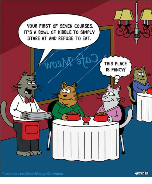 fanciness: YOUR FIRST OF SEVEN COURSES.  IT'S A BOWL OF KIBBLE TO SIMPLY  STARE AT AND REFUSE TO EAT  facebook.com/ScottMetzgerCartoons  THIS PLACE  S FANCY!  METZGER