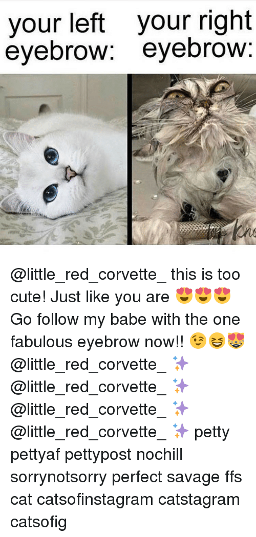 Memes, Corvette, and 🤖: your left your right  eyebrow  eyebrow @little_red_corvette_ this is too cute! Just like you are 😍😍😍 Go follow my babe with the one fabulous eyebrow now!! 😉😆😻 @little_red_corvette_ ✨ @little_red_corvette_ ✨ @little_red_corvette_ ✨ @little_red_corvette_ ✨ petty pettyaf pettypost nochill sorrynotsorry perfect savage ffs cat catsofinstagram catstagram catsofig