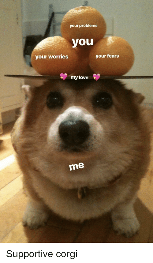 Corgi, Love, and You: your problems  you  your worries  your fears  my love  me <p>Supportive corgi</p>