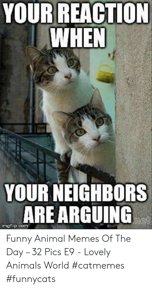 funny animal: YOUR REACTION  WHEN  YOUR NEIGHBORS  ARE ARGUING  net  imgflip.com Funny Animal Memes Of The Day – 32 Pics E9 - Lovely Animals World #catmemes #funnycats