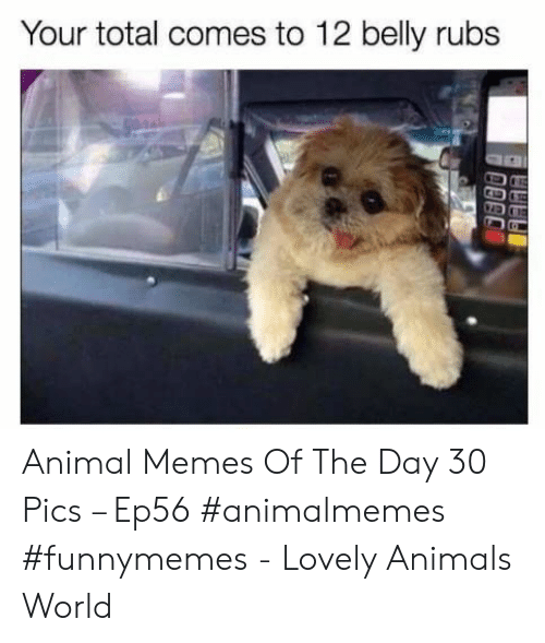 memes of the day: Your total comes to 12 belly rubs Animal Memes Of The Day 30 Pics – Ep56 #animalmemes #funnymemes - Lovely Animals World