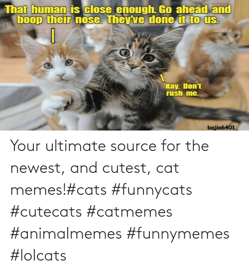 source: Your ultimate source for the newest, and cutest, cat memes!#cats #funnycats #cutecats #catmemes #animalmemes #funnymemes #lolcats