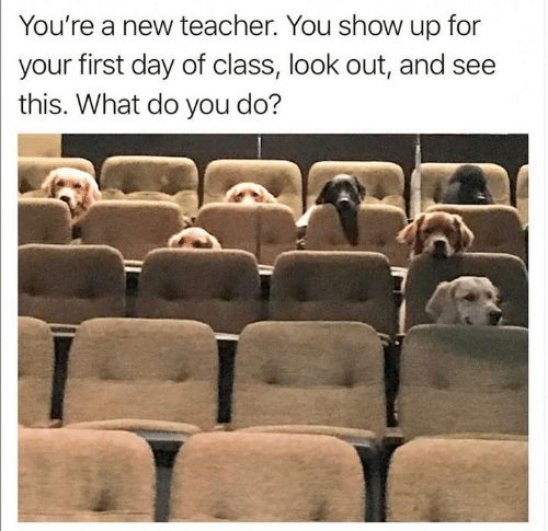 Teacher, Class, and Day: You're a new teacher. You show up for  your first day of class, look out, and see  this. What do you do?