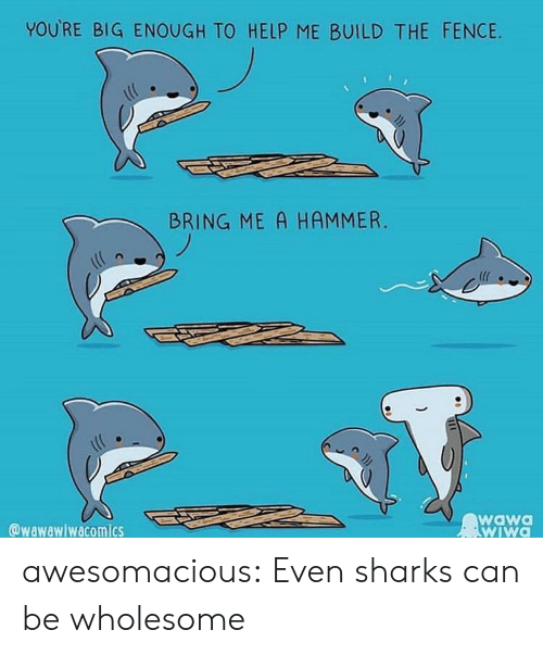 Tumblr, Blog, and Help: YOURE BIG ENOUGH TO HELP ME BUILD THE FENCIE  BRING ME A HAMMER.  @wawawiwacomics  wawa  wIWa awesomacious:  Even sharks can be wholesome