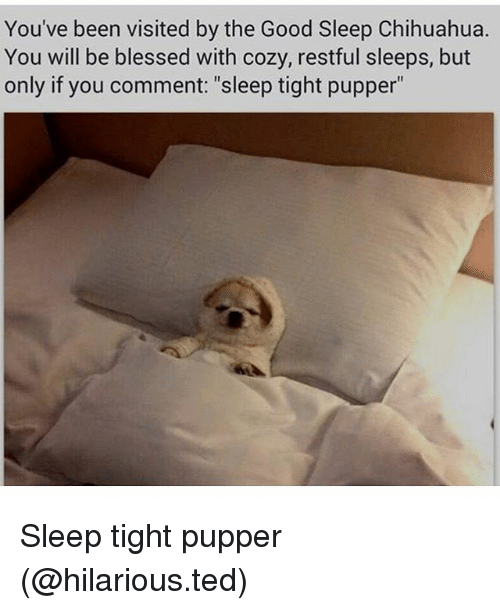 """restful: You've been visited by the Good Sleep Chihuahua.  You will be blessed with cozy, restful sleeps, but  only if you comment: """"sleep tight pupper"""" Sleep tight pupper (@hilarious.ted)"""