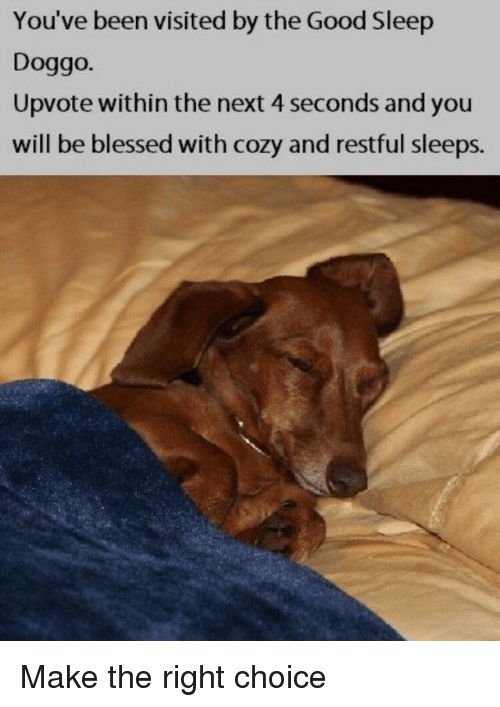 restful: You've been visited by the Good Sleep  Doggo.  Upvote within the next 4 seconds and you  will be blessed with cozy and restful sleeps. Make the right choice