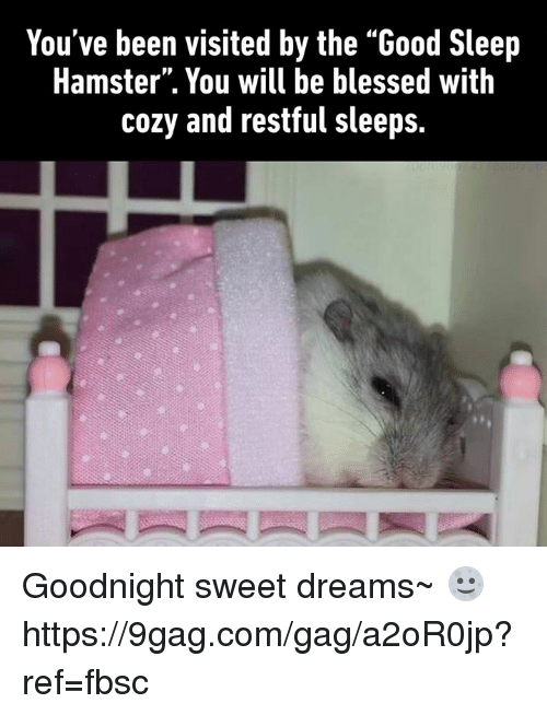 """restful: You've been visited by the """"Good Sleep  Hamster"""". You will be blessed with  cozy and restful sleeps. Goodnight sweet dreams~ 🌝 https://9gag.com/gag/a2oR0jp?ref=fbsc"""