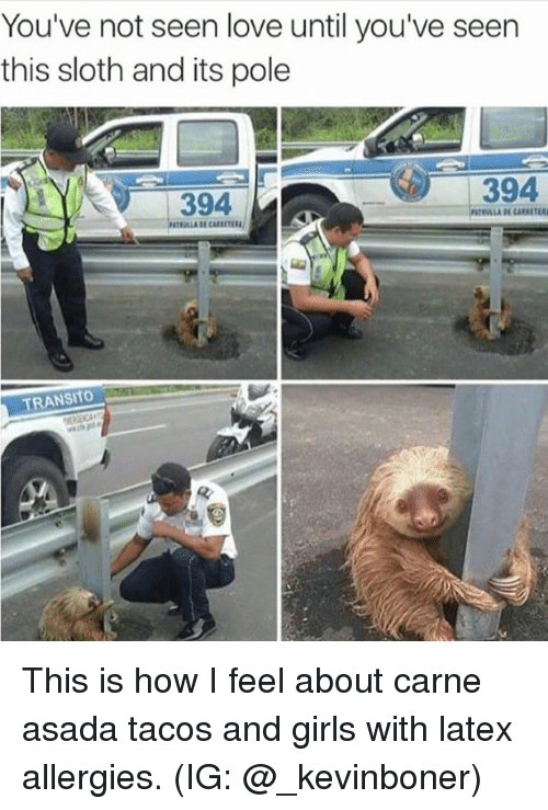 🅱️ 25+ Best Memes About Sexy Sloth | Sexy Sloth Memes