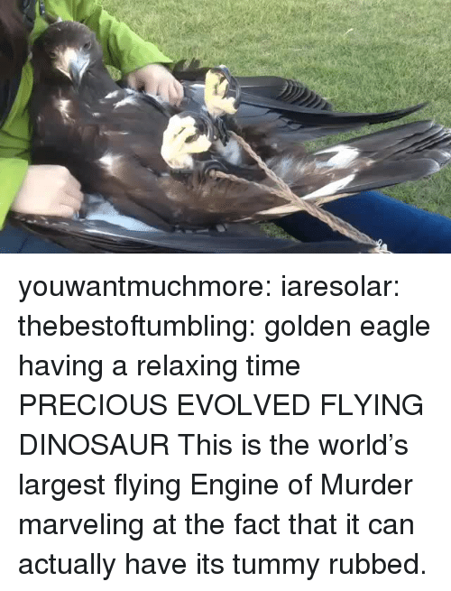 Dinosaur, Precious, and Target: youwantmuchmore:  iaresolar:  thebestoftumbling:    golden eagle having a relaxing time    PRECIOUS EVOLVED FLYING DINOSAUR  This is the world's largest flying Engine of Murder marveling at the fact that it can actually have its tummy rubbed.