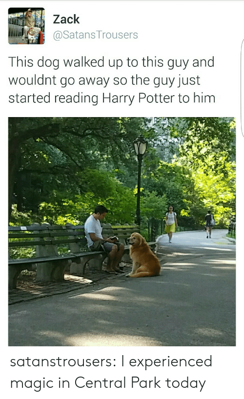 zack &: Zack  і.iiaily @SatansTrousers  This dog walked up to this guy and  wouldnt go away so the guy just  started reading Harry Potter to him satanstrousers:  I experienced magic in Central Park today