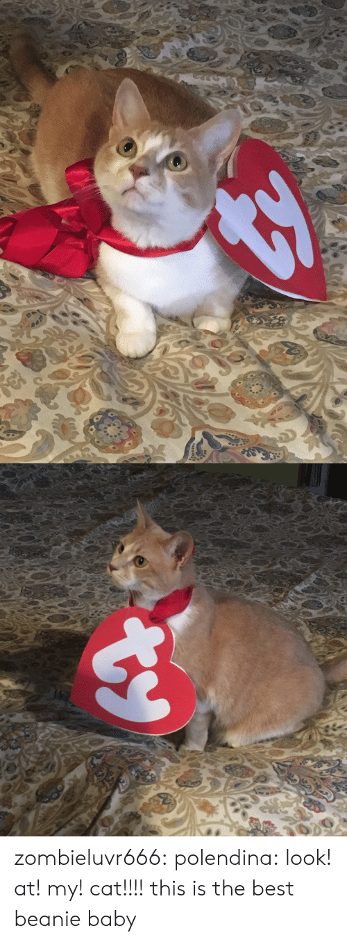 Tumblr, Best, and Blog: zombieluvr666:  polendina:  look! at! my! cat!!!!   this is the best beanie baby